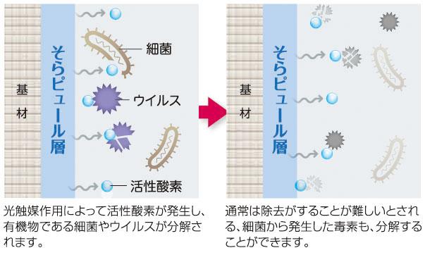 抗菌・抗ウイルス機能のイメージ図
